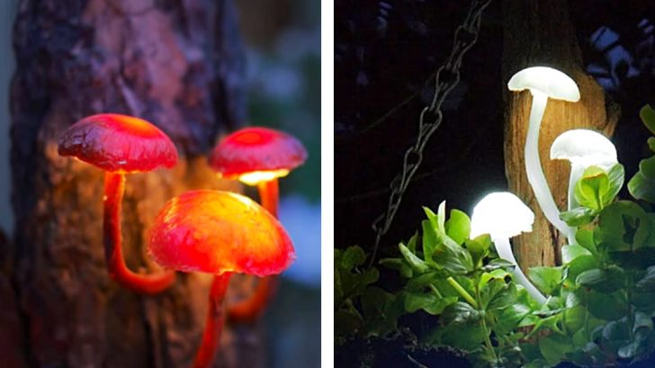 Easy DIY Mushroom Lights Are The Magic Your Garden Is Missing – DIY Ways